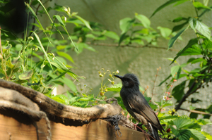 20120520_Bird.jpg